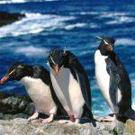 Jeu Les Pingouins De Diapositives