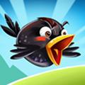 Fou Oiseaux 2